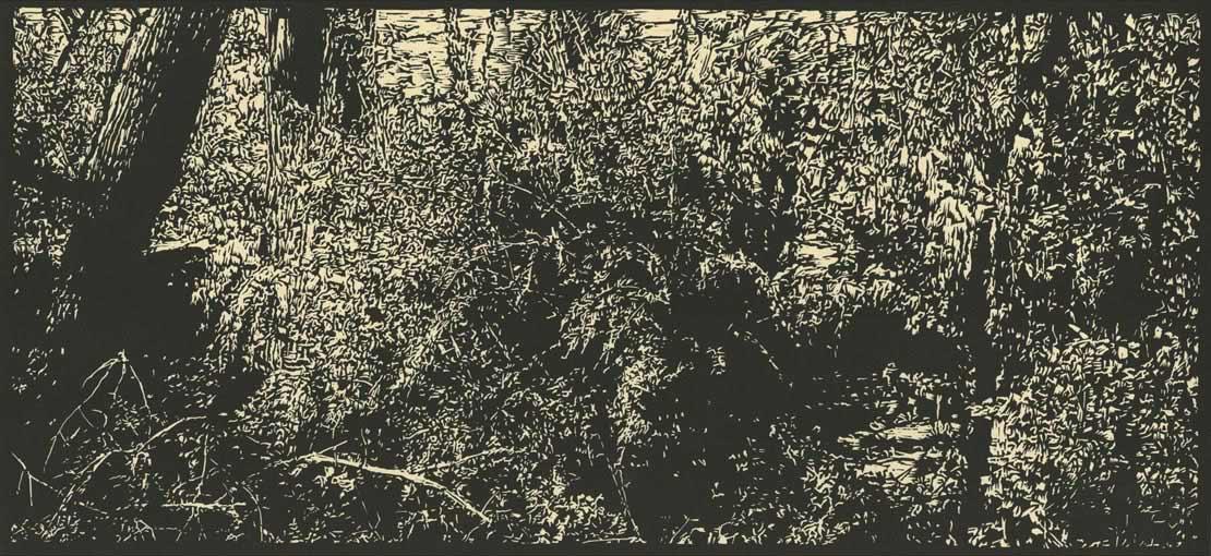 David Conn - Willow Spring Creek