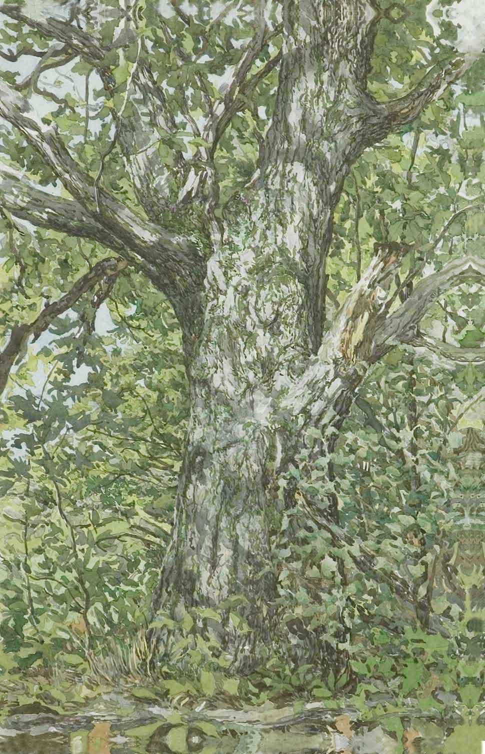 Greg Damery - Old Oak (Purple)