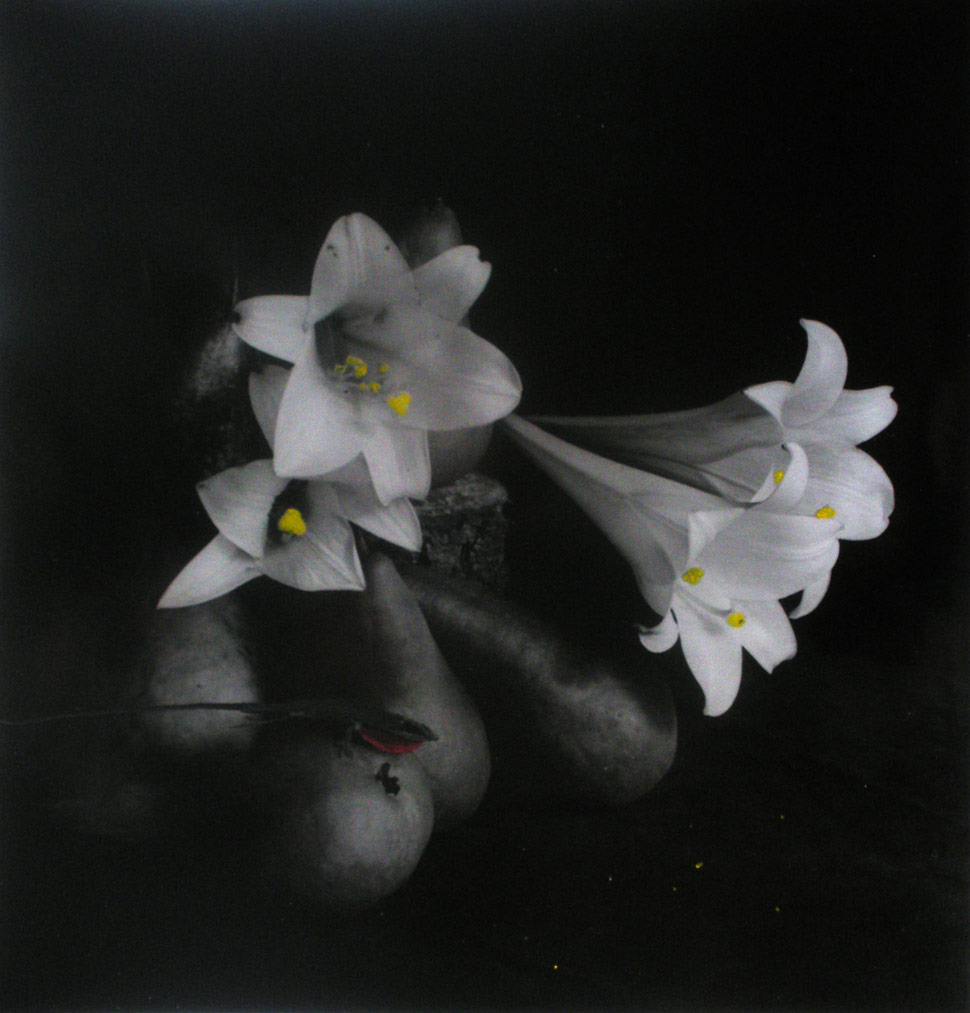 Charles DeBus - Still Life with Lillies