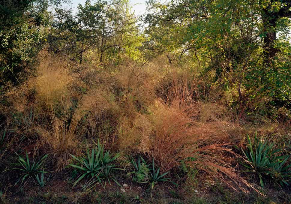 Luther Smith - Seresa Grass, Century Plants, Lake Worth, Texas