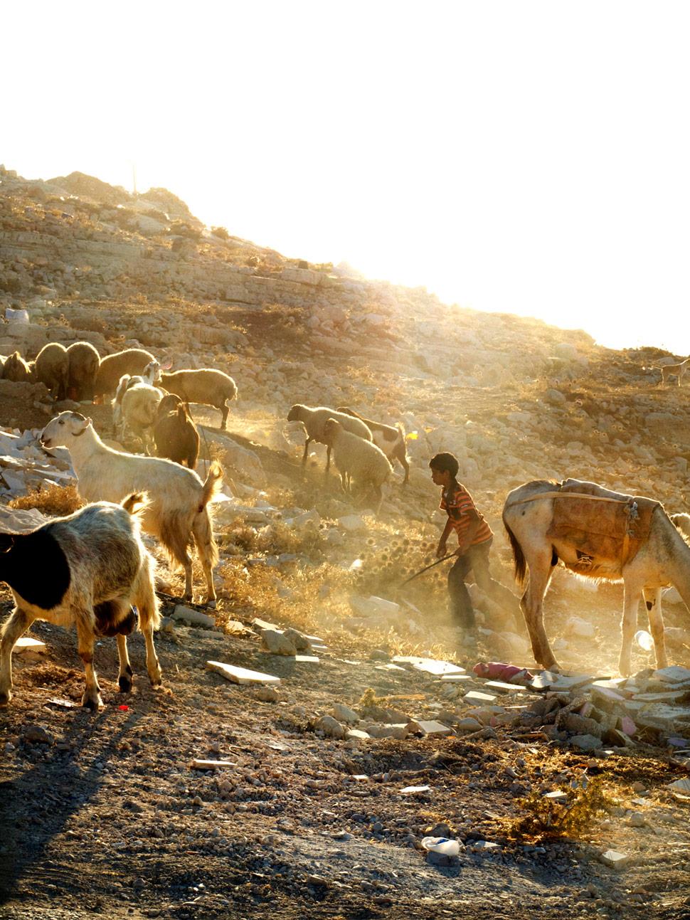 Kamal Wyatt - Bediwin boy and his goats