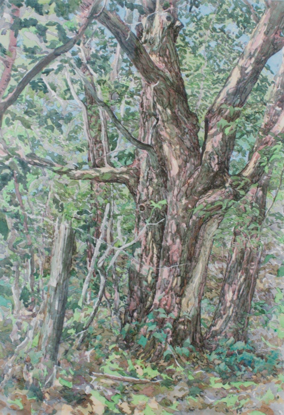 Greg Damery - Red Oak
