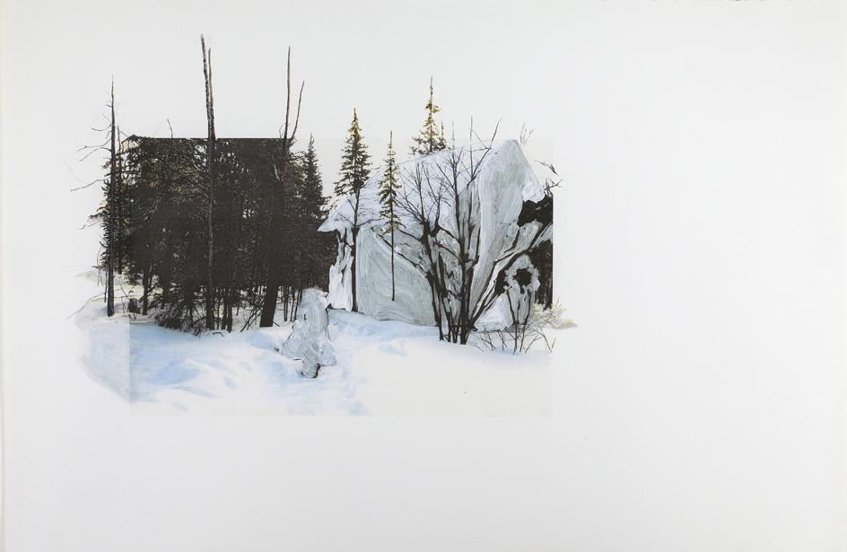 Graham Curry - Forest Reclamation (Algonquin Park)