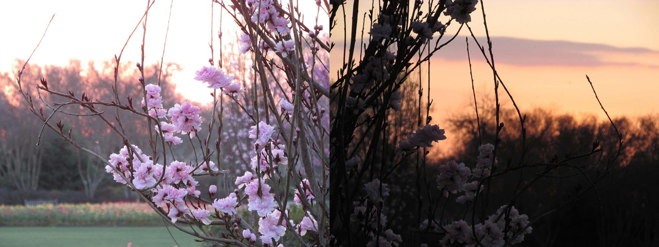 Caitlyn Nygaard - Sunset Flowers