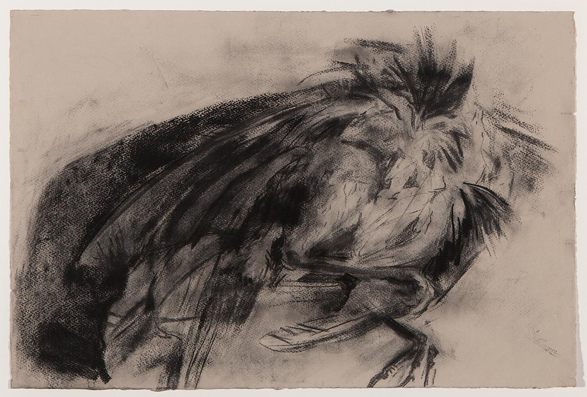 Luke Sanchez - Untitled (boat tailed grackle)