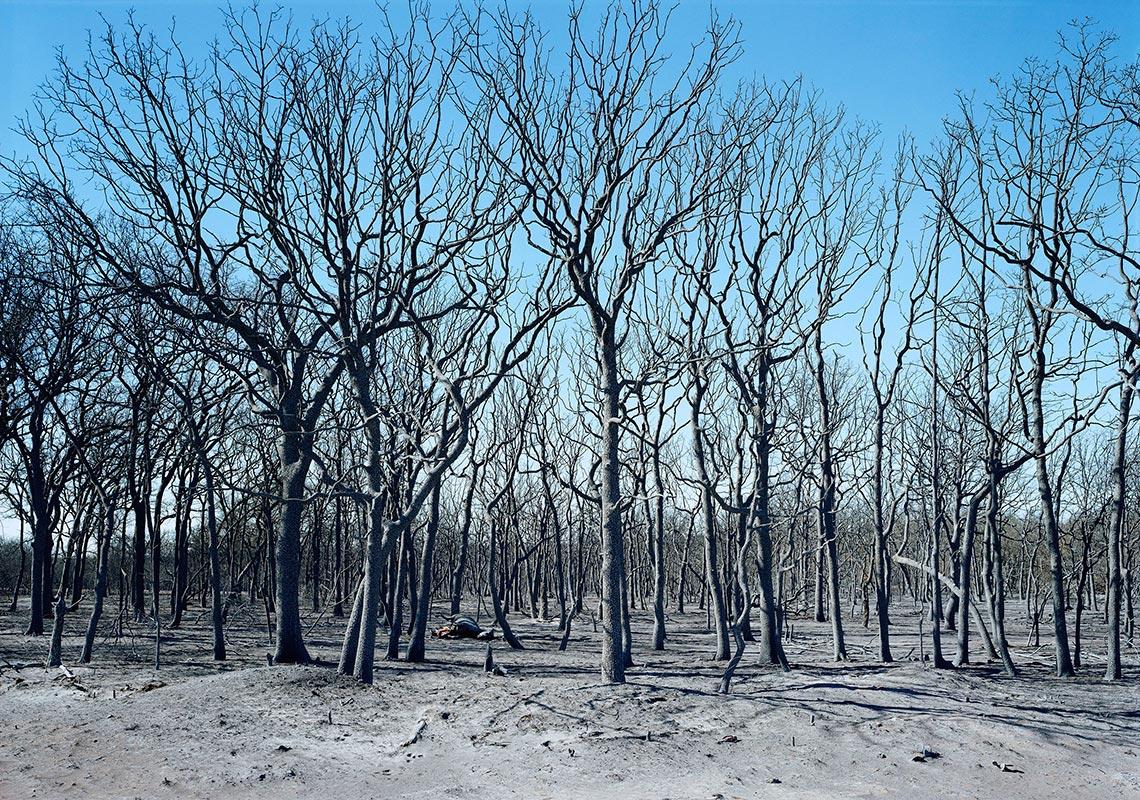 Luther Smith - Dead Horses Near Carbon, Texas, 2006