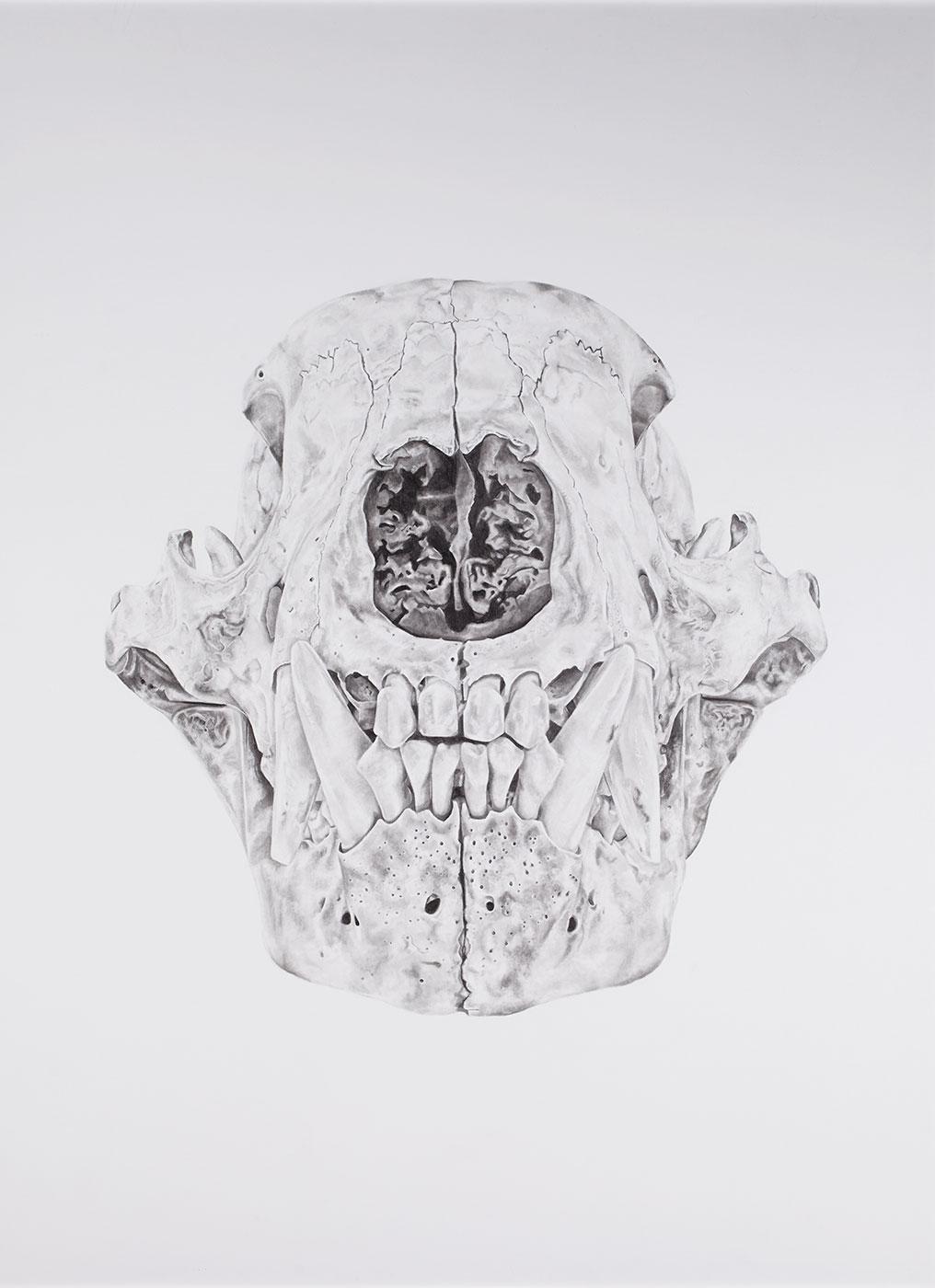 Robyn M. DuTemple - Bear Cub Skulls