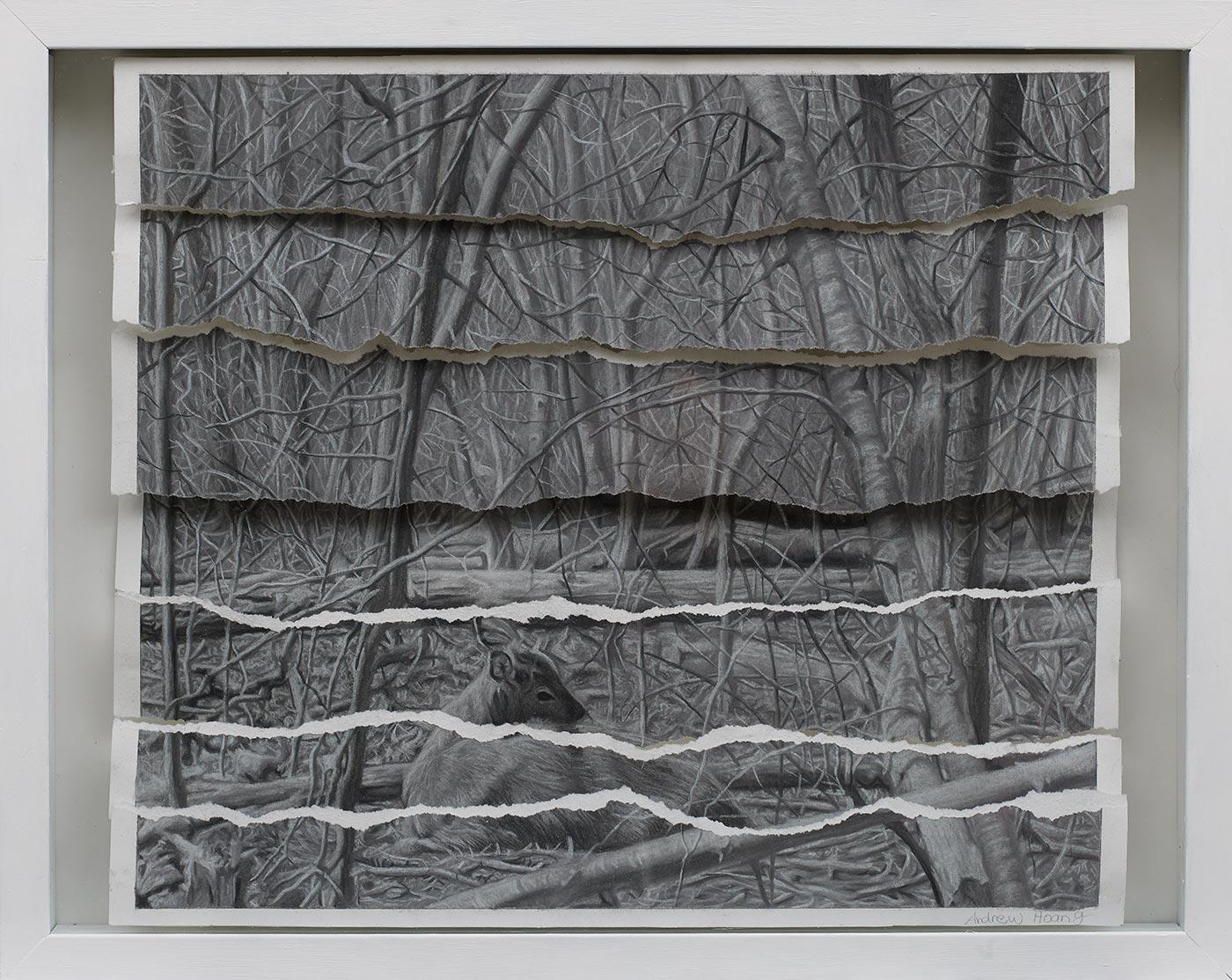 Andrew Hoang  - Stillness