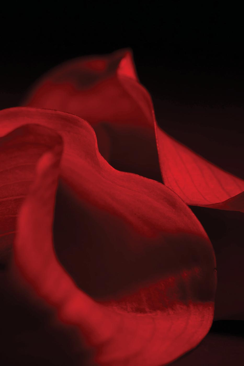 Sarah E. Bisnette  - Untitled Flower Series