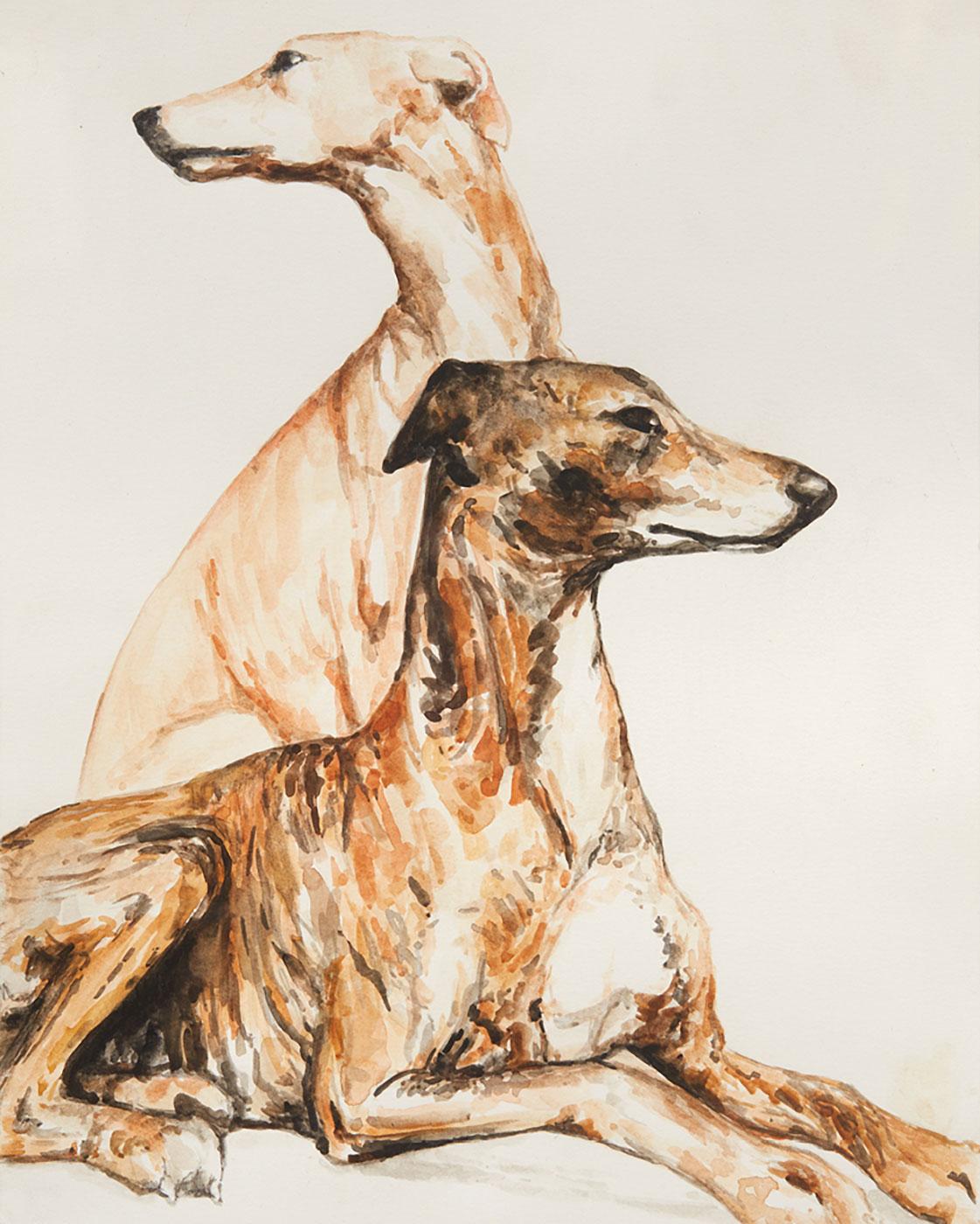 Rowan A. McCulloch   - Spanish Greyhounds