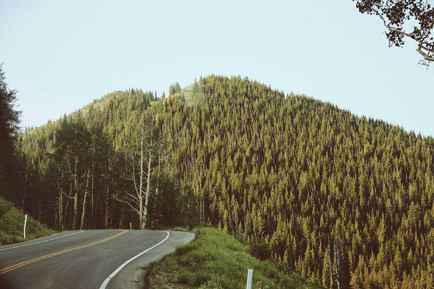 Madison S. Palica - Phenomenology: Utah