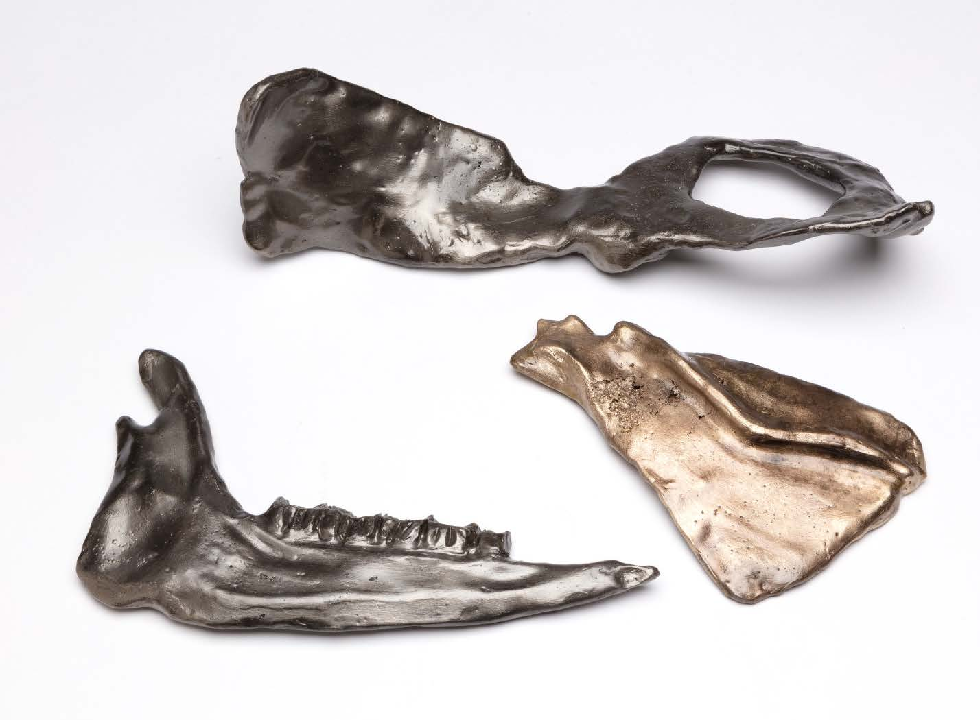 Taylor M. Knight - Animal Bones in Iron,